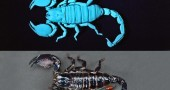 14-scorpions_df