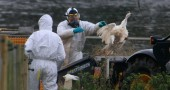 Bird Flu Outbreak Confirmed At Suffolk Farm