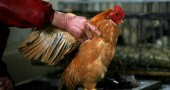 China Confirms H5N1 Bird Flu Case In Poultry
