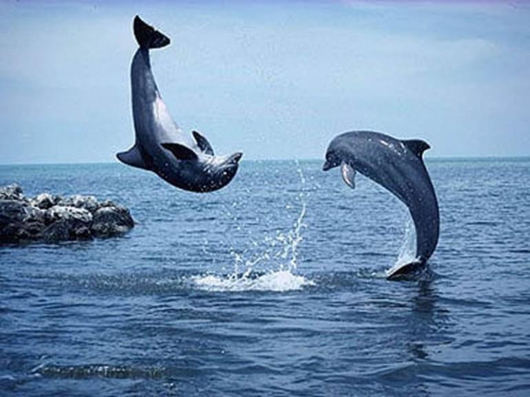 delfini_032