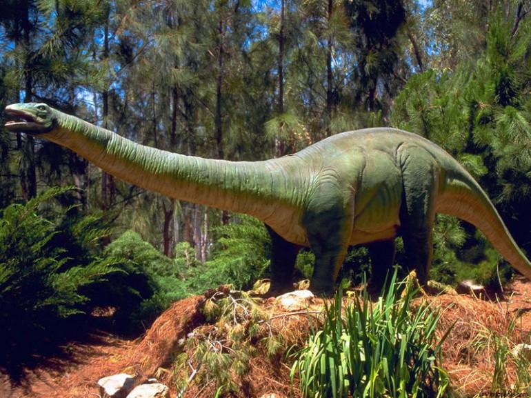 Brontosaurus-dinosaurs-1993647-800-600