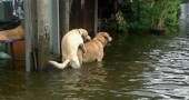funny-flood-photos-3