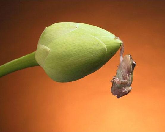 14-Hanging-Frog
