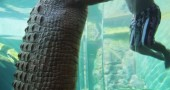 Cage-Of-Death-Crocodile-Dive-Experience-3