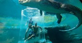 Cage-Of-Death-Crocodile-Dive-Experience-4