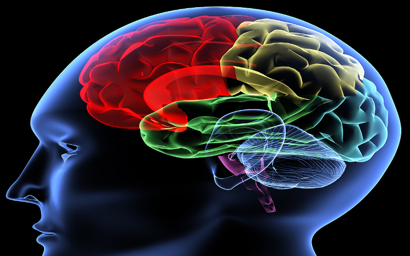 come il cervello combatte l'ansia