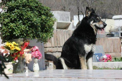 Le foto del cane vive sulla tomba del padrone