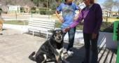 fedeltà cane2