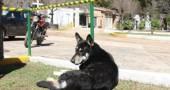 fedeltà cane4