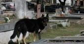 fedeltà cane6