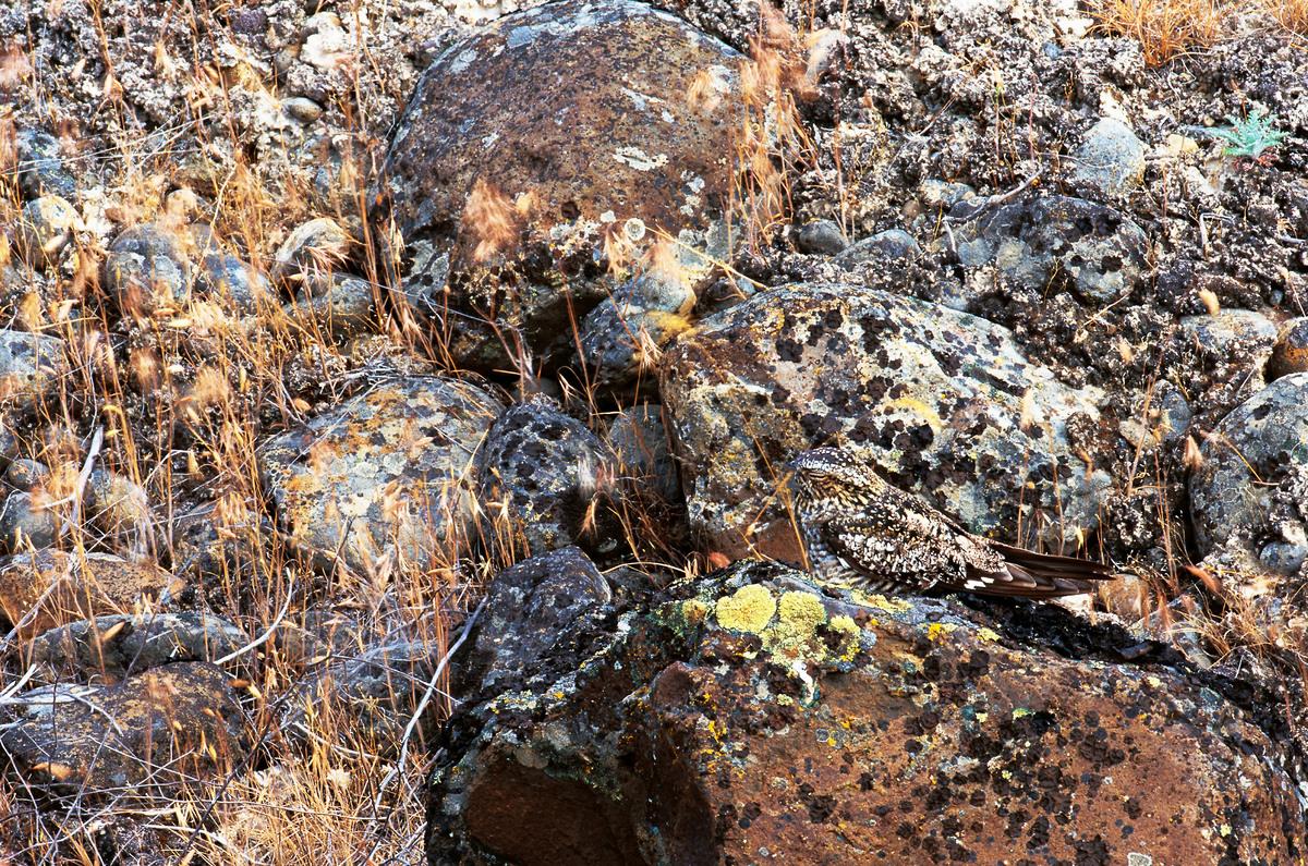 Una civetta tra le rocce