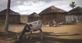 Spot provocatorio-Banchieri rubano cibo a popolo africano