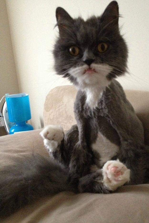 Funny Buzzfeed Cat