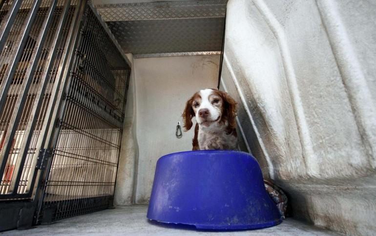 Potete portare i cani in ufficio giornalettismo - Portare il cane al canile ...