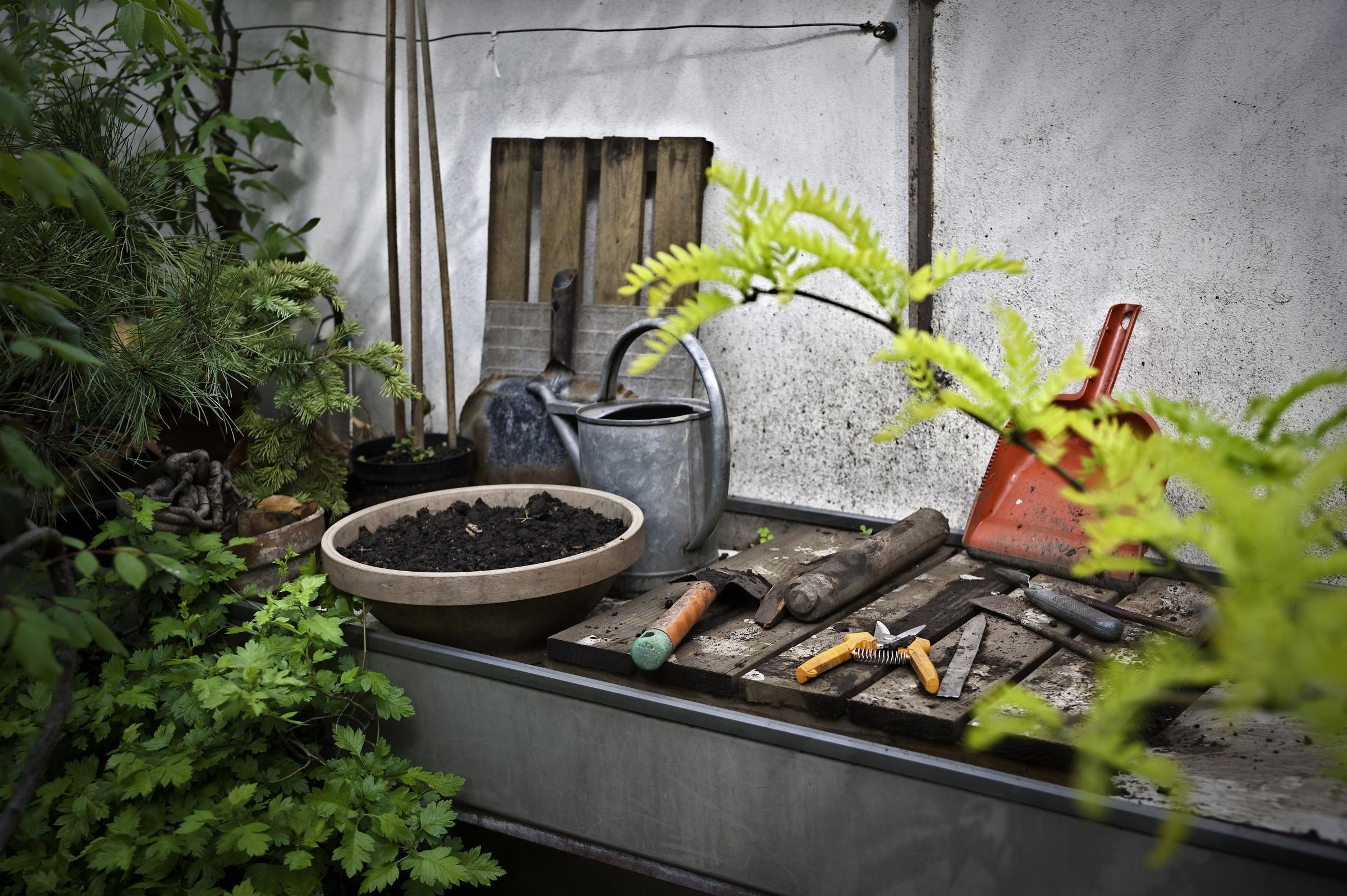giardinaggio-palestra (2)