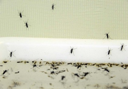 Esistono anche abiti realizzati con una resina acrilica repellente, in grado di neutralizzare le zanzare