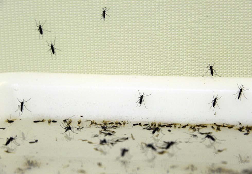 L 39 identikit delle vittime preferite dalle zanzare for Larve zanzare