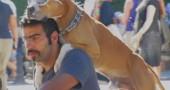 cane proteste turchia erdogan 2