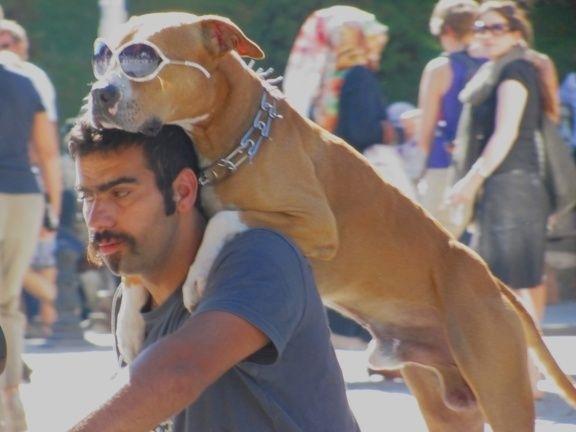 Il cane che protesta contro Erdogan e diventa una celebrità mondiale