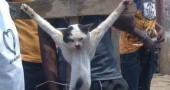 gattocrux