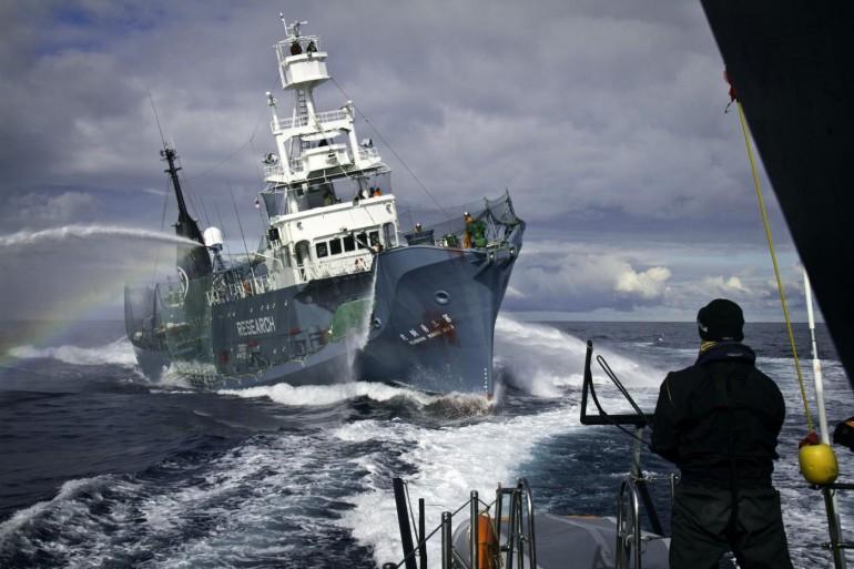Il Giappone cambia la caccia alle balene