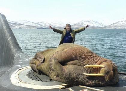 leone marino sottomarino russia
