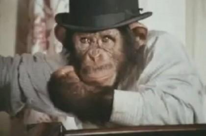 louis scimpanzè 2