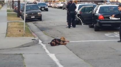 polizia uccide cane 2