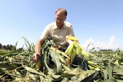 Il nostro sguardo, sugli OGM e non solo, è critico e si rivolge al passato, al presente e al futuro