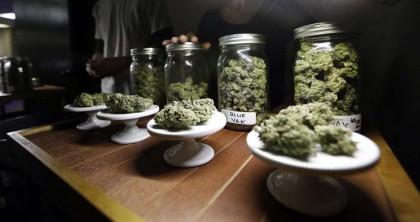 cannabis cura leucemia (2)