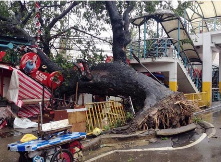 [Immagine: Tifone-Filippine-6.jpg]