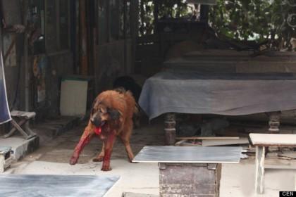 cane ammazzato folla cina 2