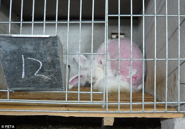 Il Video Dei Conigli D Angora Torturati Per Il Loro Pelo