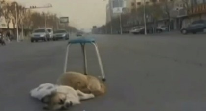 cane veglia cane amico morto 1