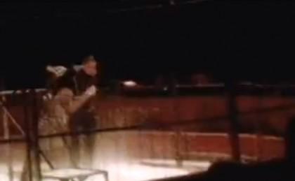 tigre circo attacca domatore 2
