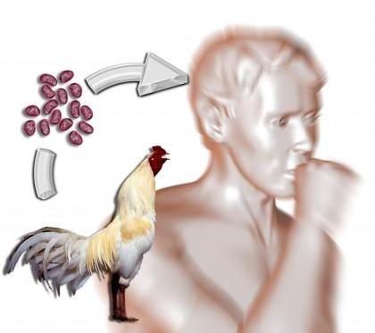 influeza aviaria h5n1 sintomi 2