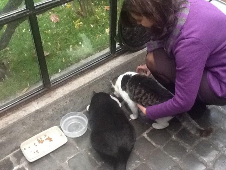 laura boldrini gatto nero