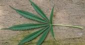 1) La marijuana non solo si fuma ma può essere trasformata in alimenti di varia natura, dai dolci alle salse