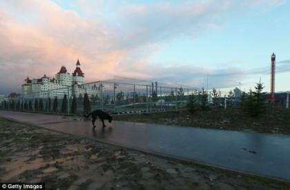Cani randagi Sochi 2