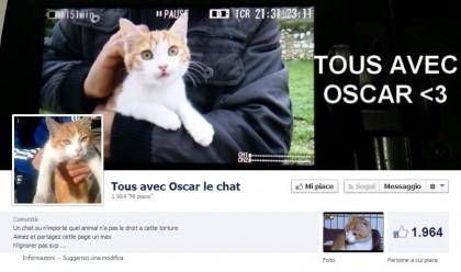 Oscar gatto torturato marsiglia (2)