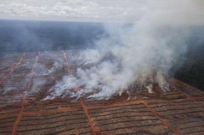 Deforestation In Papua