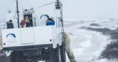 L'orso polare che vuole stare vicino vicino a Google Street View