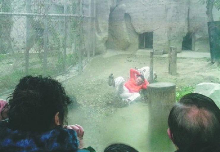 suicidio zoo tigri 1