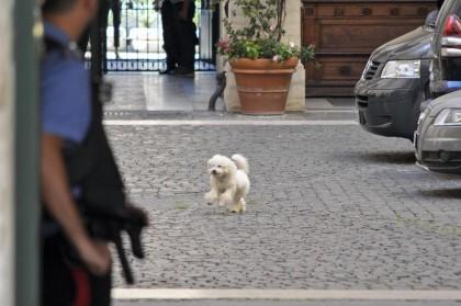 Dudù, il cane di Silvio Berlusconi e Francesca Pascale (Lapresse)