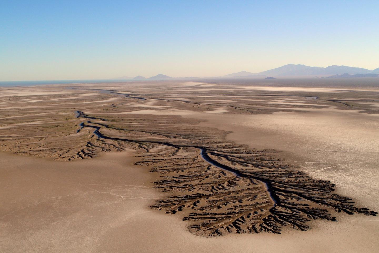 Il deserto che torna alla vita nel delta del Colorado ...