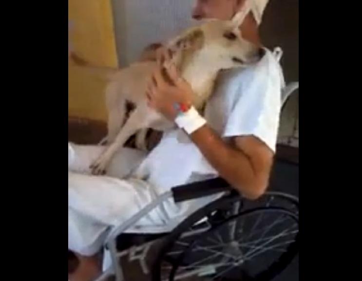 cane attende padrone ospedale per 8 giorni 2