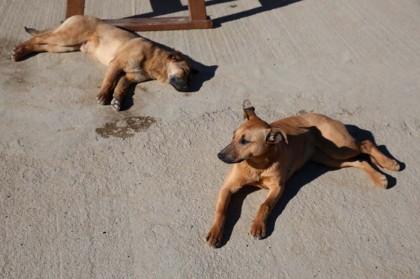 cane ucciso nuoro