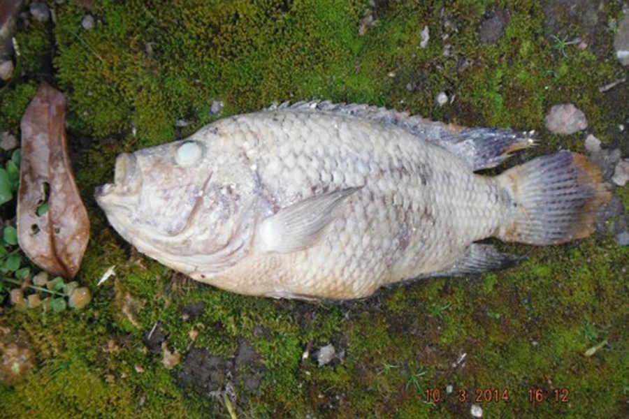 fogna bloccata pesci