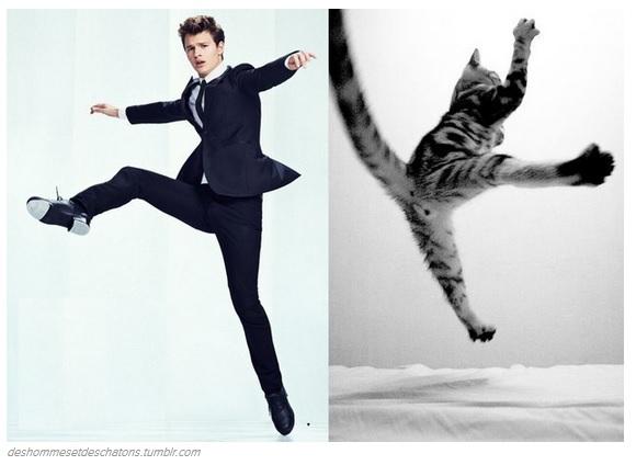 I 31 gattini che sono pi belli dei divi di hollywood foto 5 di 31 giornalettismo - Altezza divi di hollywood ...