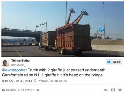 giraffa morta ponte sudafrica 1